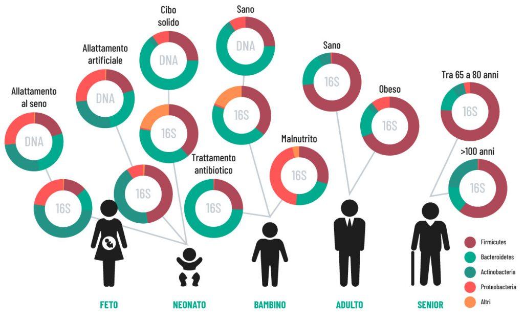 Le variazioni del microbiota nelle fasi della vita   Entero 4